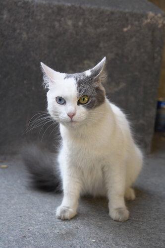 taska-cat22 — «выборгская кошка» на Яндекс.Фотках