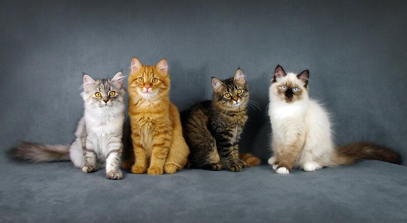 Пятничные котики!