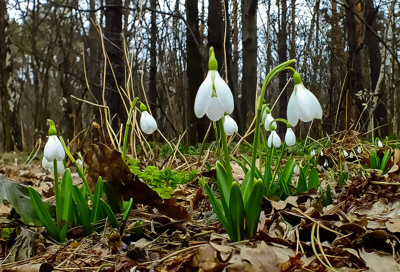 Виват весне! Виват цветам,Что расцветают тут и там!