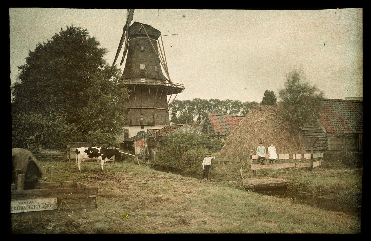 1912. Трое детей и корова в Харлеммервег, Амстердам