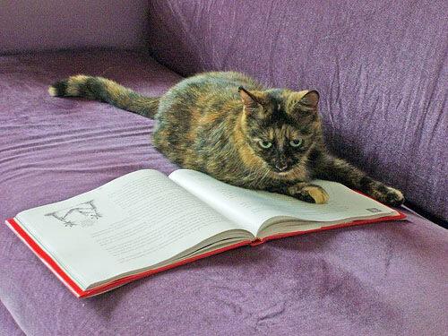 kotopedia — «Что расскажет книжка мне, то увижу я во сне. Прочитаю про сметану и во сне обедать стану.» на Яндекс.Фотках