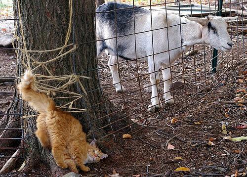kotopedia — «Что, котяра, зуд замучил? Вижу, как ты зад свой скрючил. С этим лучше не шути и к проктологу сходи!» на Яндекс.Фотках