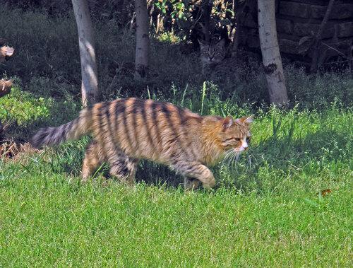 suzdalevakat — «Полосатый охотник» на Яндекс.Фотках