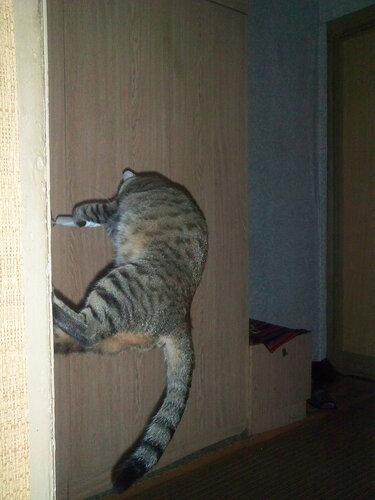 warpdie — «Еще немного летающих котиков.» на Яндекс.Фотках