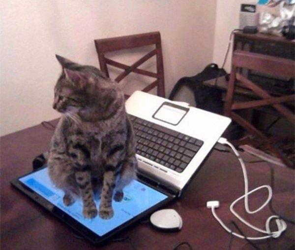 коты мешают человеку работать за компьютером 5