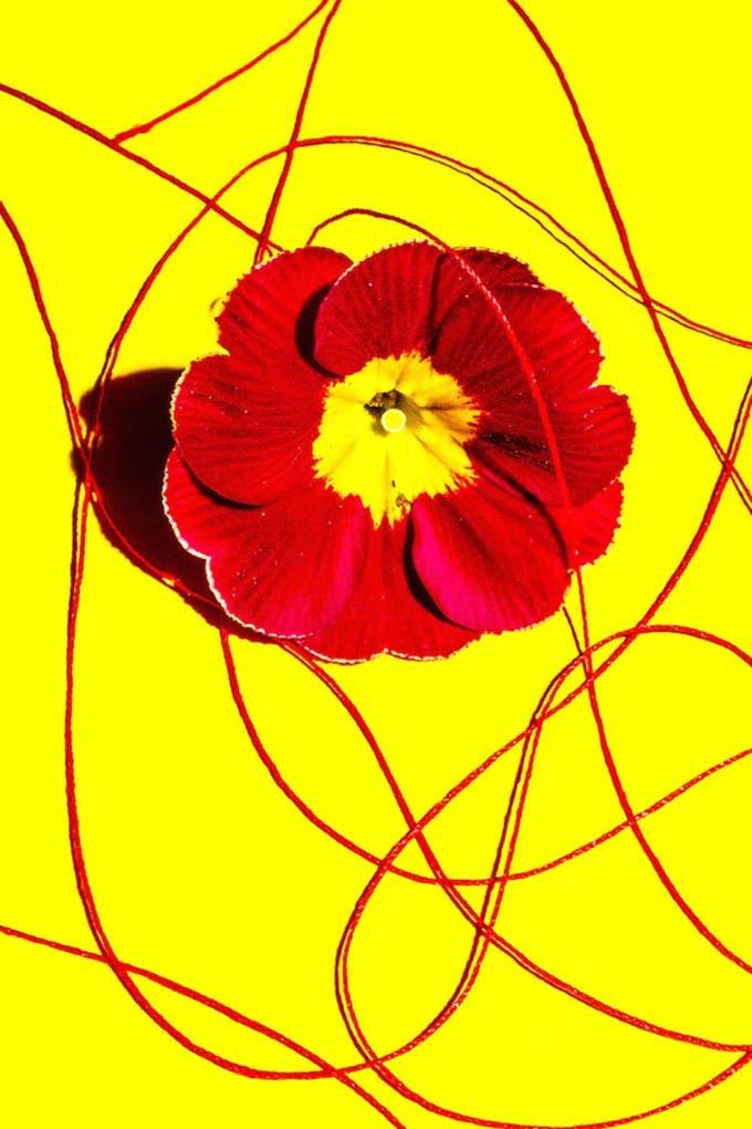 Концептуальные фотографии с насыщенными цветами