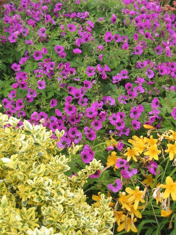 Цветы из садов Пауэрскорта