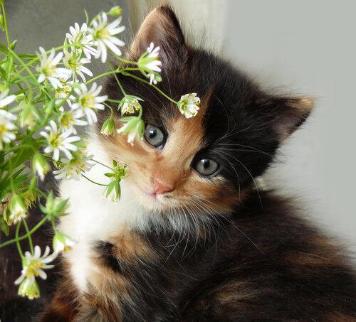 Улыбка киски  Алиски