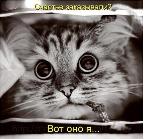 ♥°• Lenk@ •°♥ — «42908374_1240426562_1238196943_1237937702_kotomatrix_19.jpg» на Яндекс.Фотках