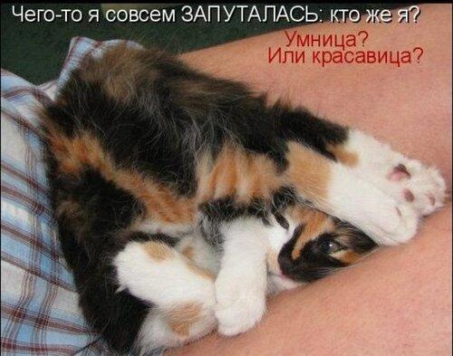 ♥°• Lenk@ •°♥ — «42908378_1240426588_1238196980_1237937694_kotomatrix_21.jpg» на Яндекс.Фотках