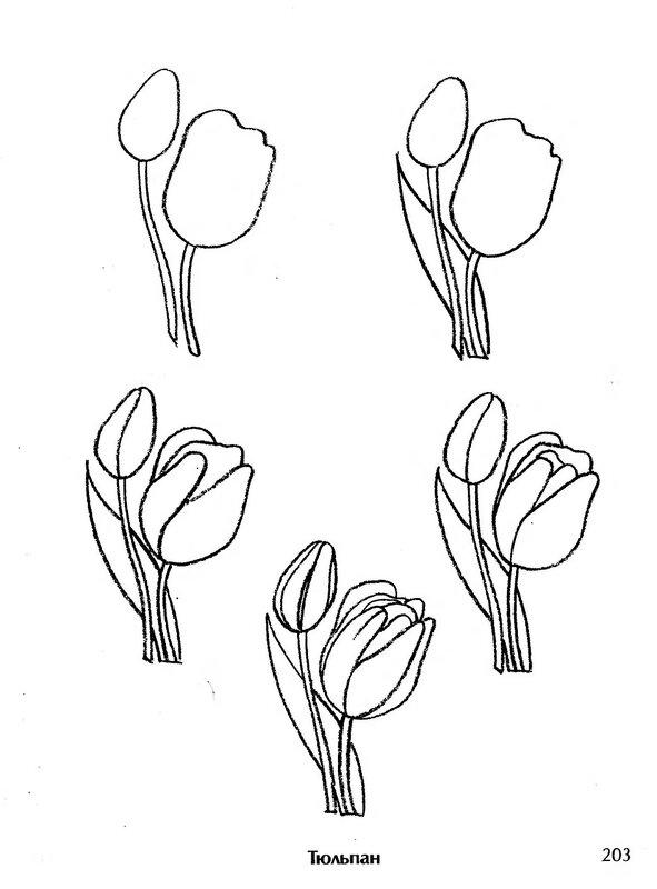 Картинки цветы красивые нарисованные карандашом 8