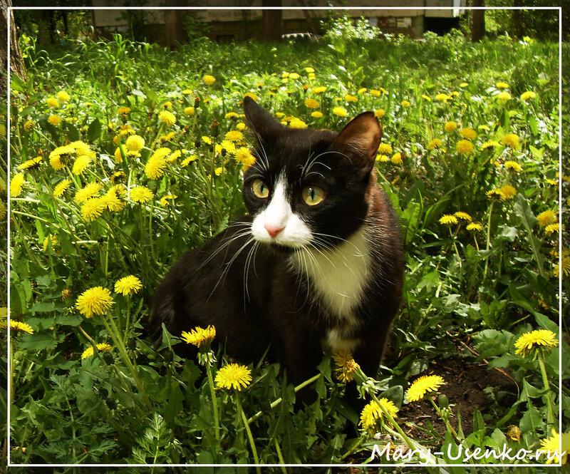 Кошка Ляся, сайт megakoshka.ru