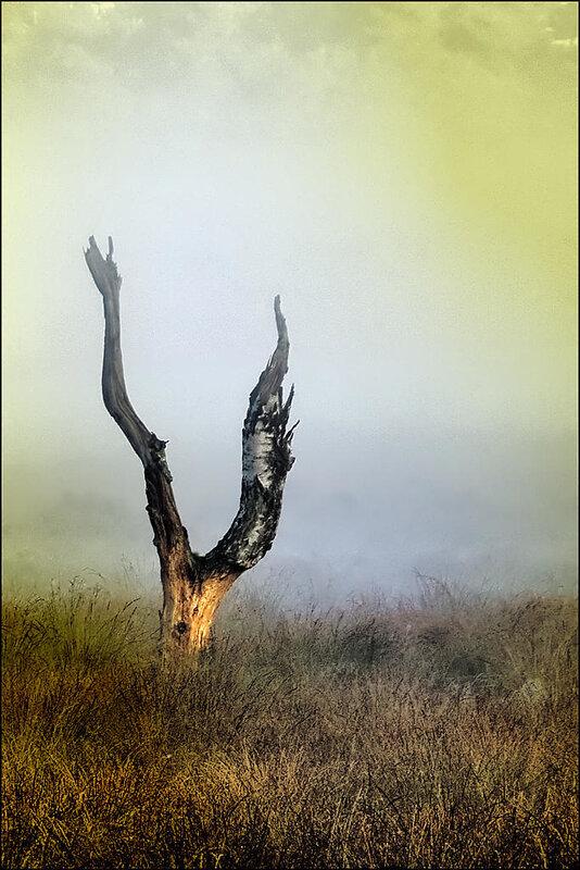 мистическое дерево