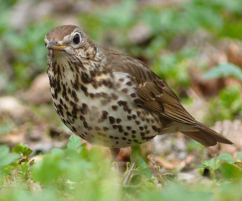 Диких птиц украшение леса состоящие