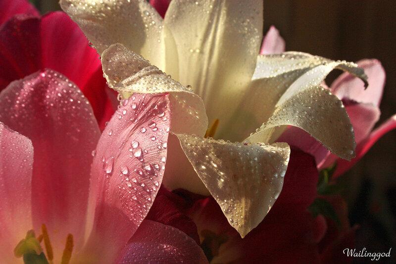 Картинки с добрым утром цветы лилии, москвы картинки станций