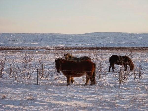 Исландия, рай на земле и северное сеяние 0 12cfd3 6b4d27ec orig