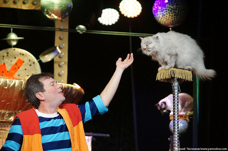 Осень. Театр кошек. ДИНАСТИЯ. 15.10.15.07..jpg