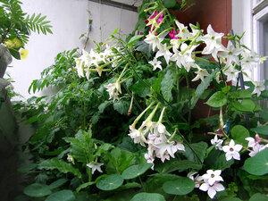 "Фото из альбома ""сад на балконе"" пользователя lay-liss."