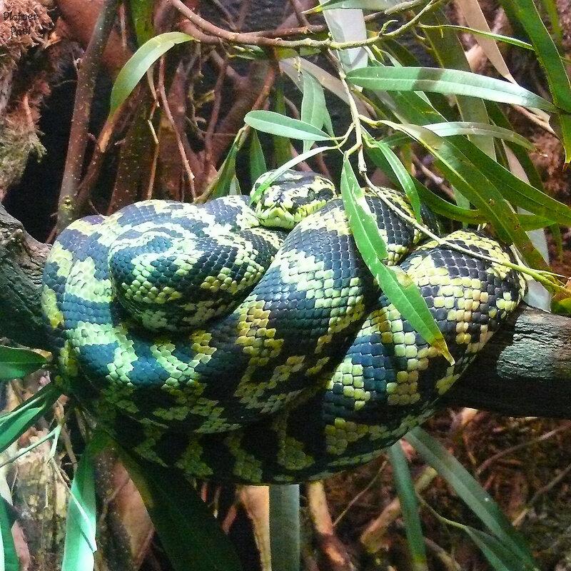 интересно как этой змее удается держать равновесие на этой ветке?