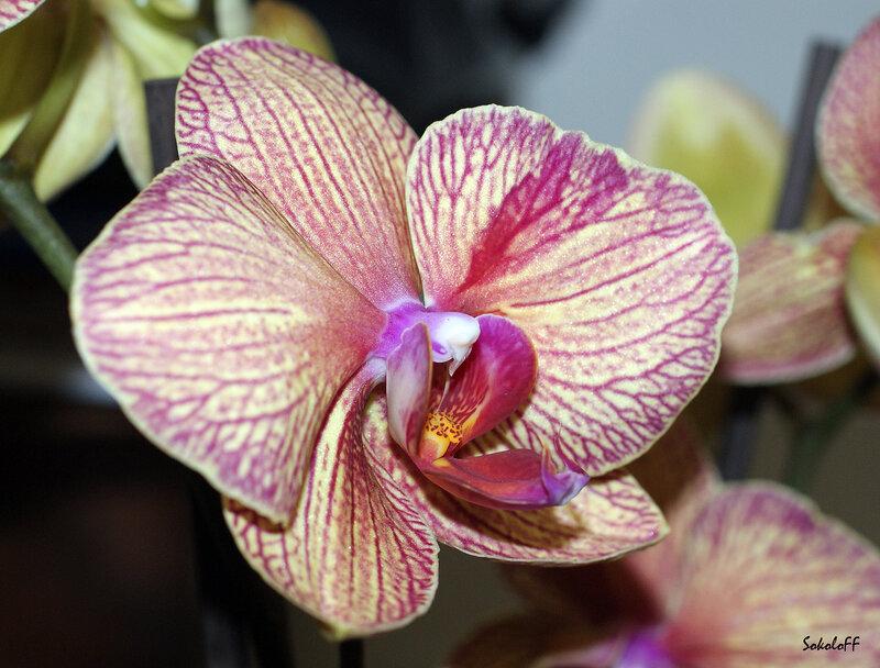 """Схема вышивки  """"Орхидея-28 """": таблица цветов."""