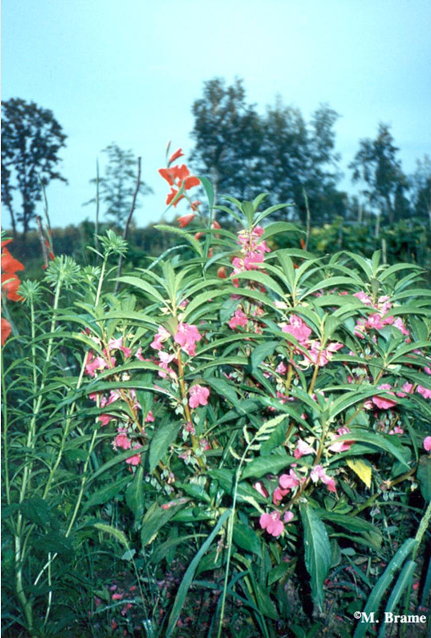 Цветы в Хабаровске