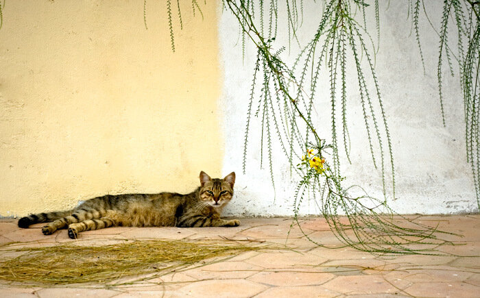 Кошки в Дахабе