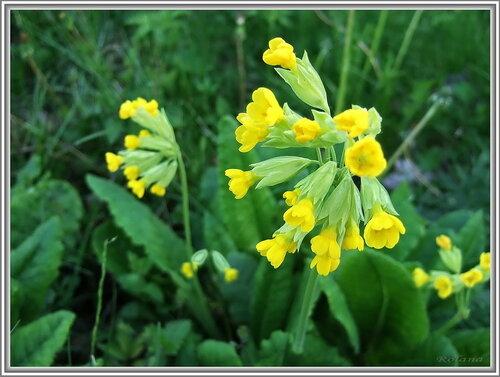 Верхушка цветущего растения