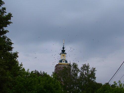Птичья стая