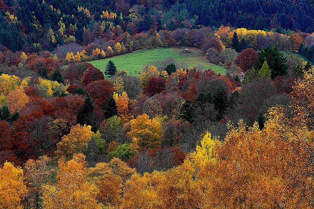 Поздне-осенние цвета Горный массив Вогезы, город Рембак-пре Мазево, Эльзас, Восточная Франция(2)