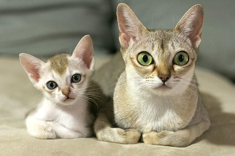 Картинки по запросу 15 кошек и их очаровательные мини-копии