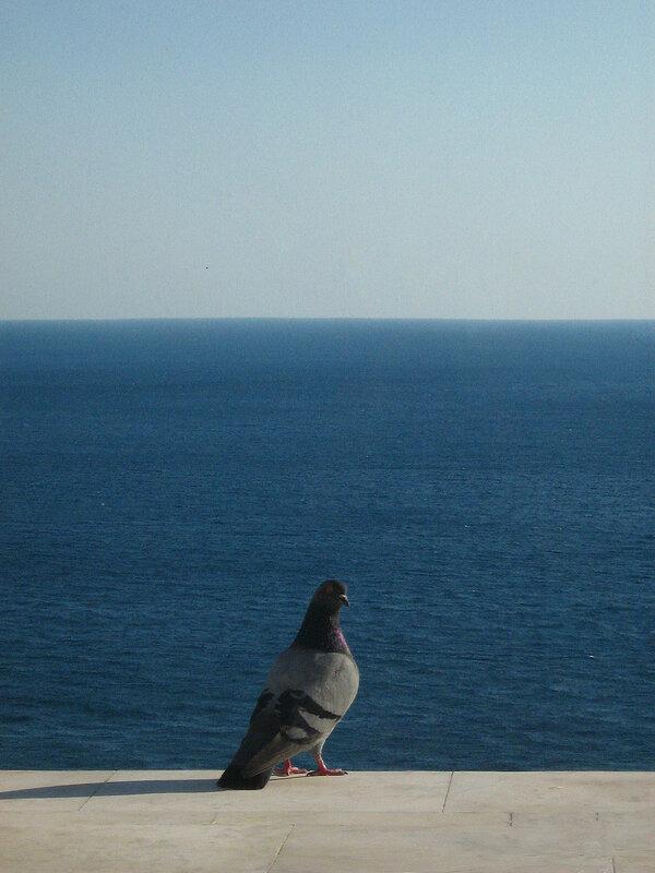 Голубь и морской пейзаж