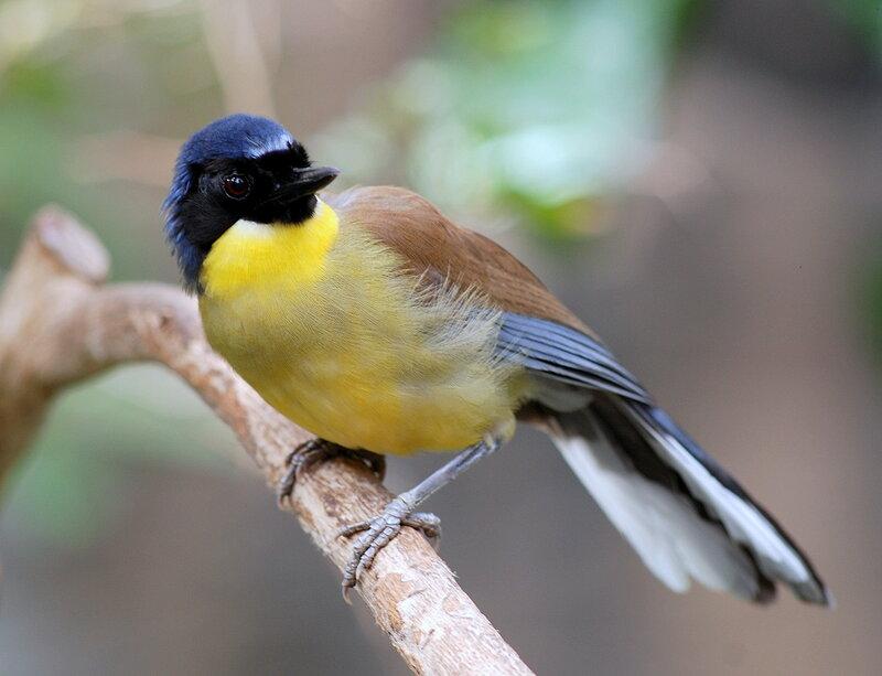 Чудесный мир птиц. Разнообразие птичьего мира. - Блог Три и …