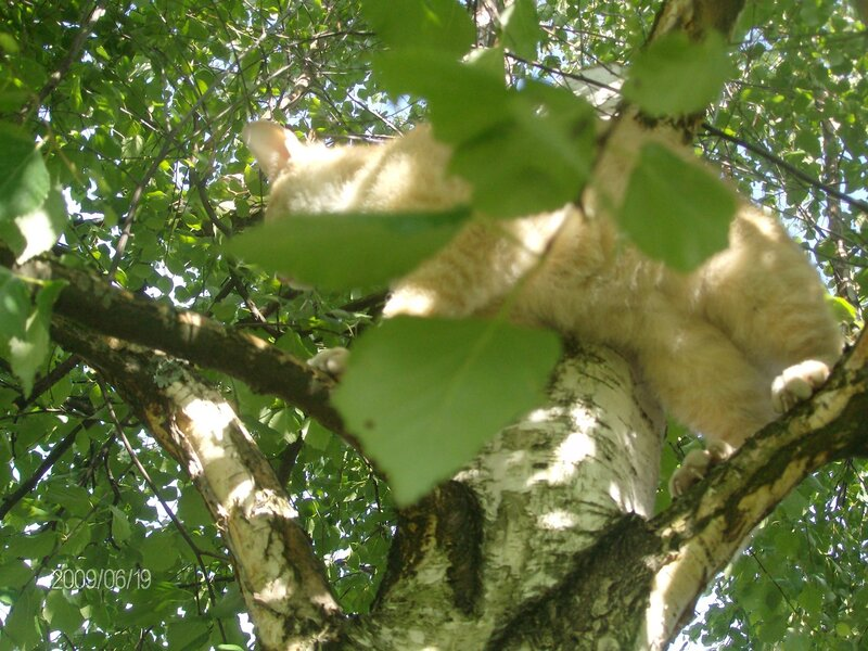 """Новая """"птичка"""" на дереве..."""