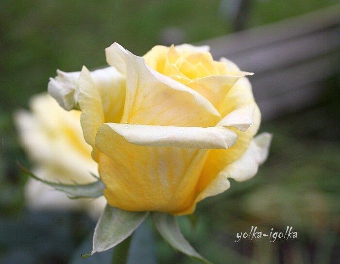 �?юльские цветы