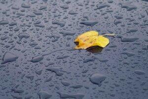 По обещаниям синоптиков эта неделя в Молдове будет дождливой
