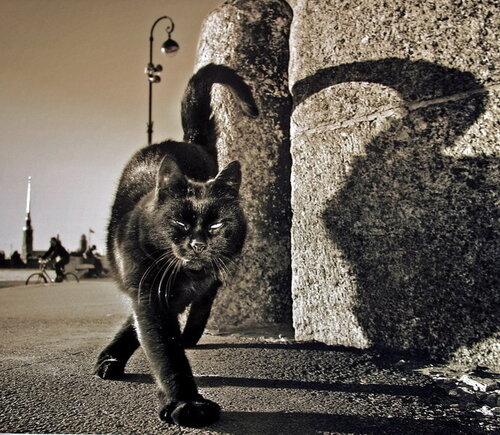 Кот, который гуляет сам по себе... автор: Александр Петросян