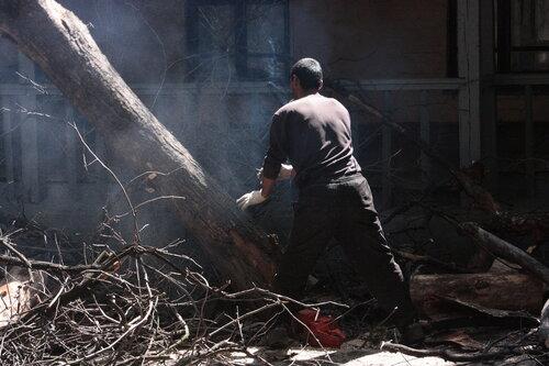 Хитровка (рубка сухих и аварийных деревьев)