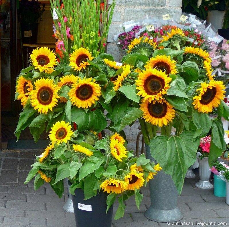 Цветы у ворот Виру.