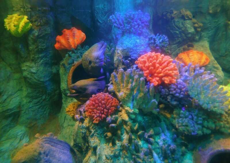 Подводная жизнь