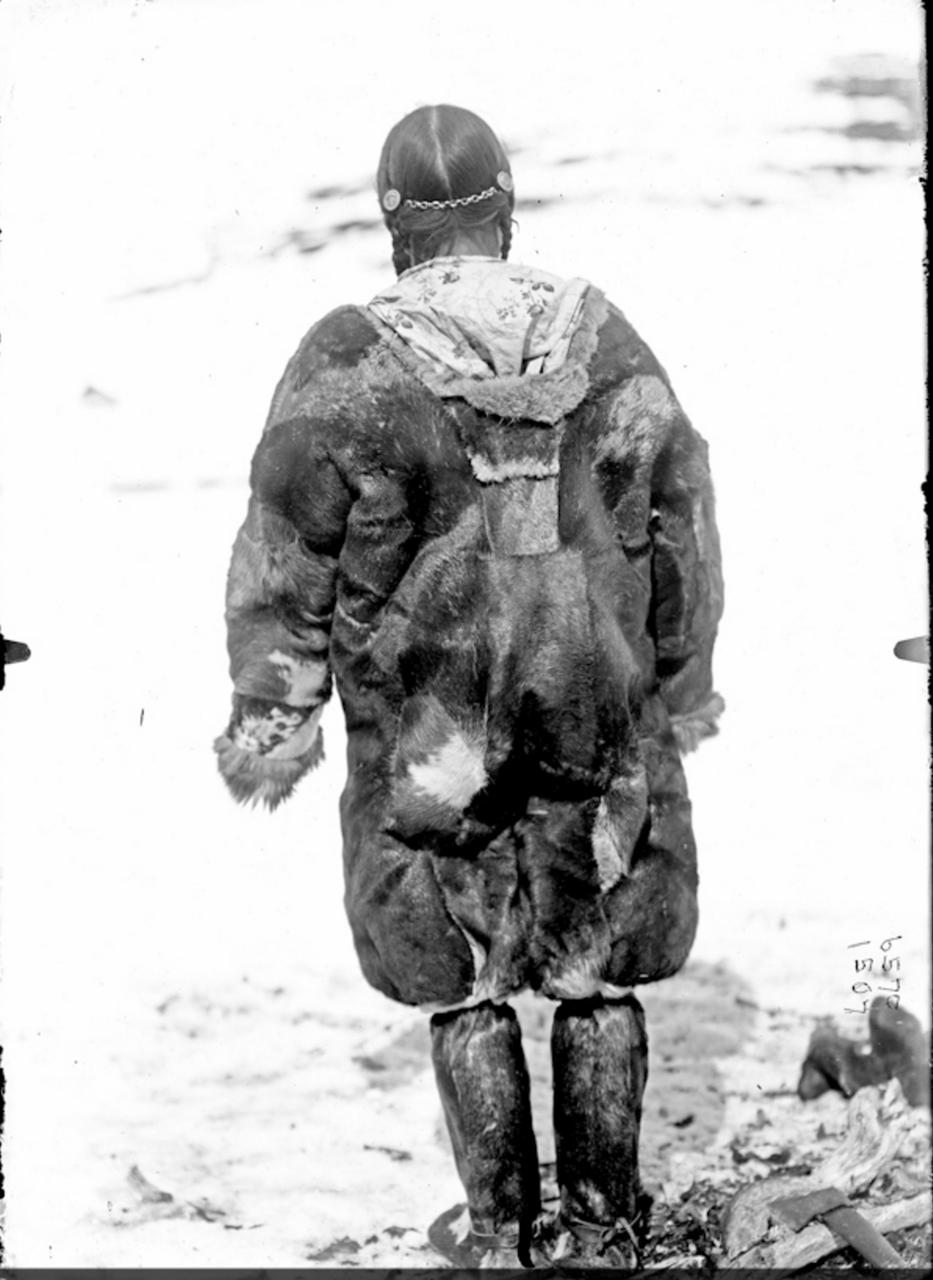 Оленная корячка, 1901