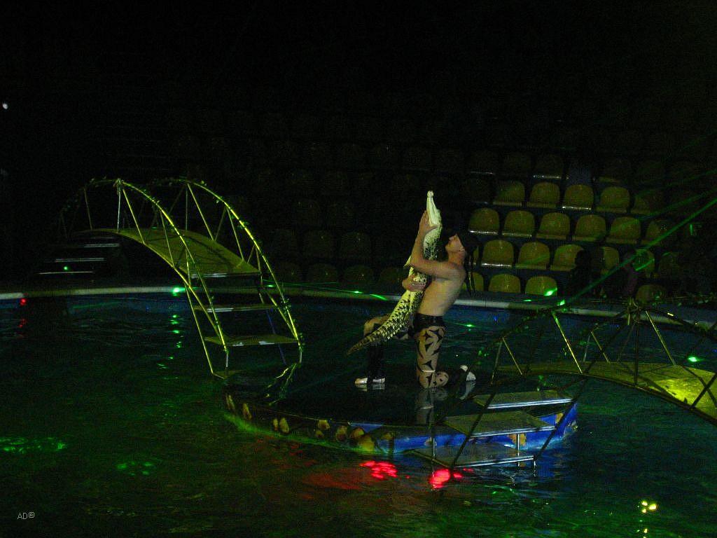цирк на воде