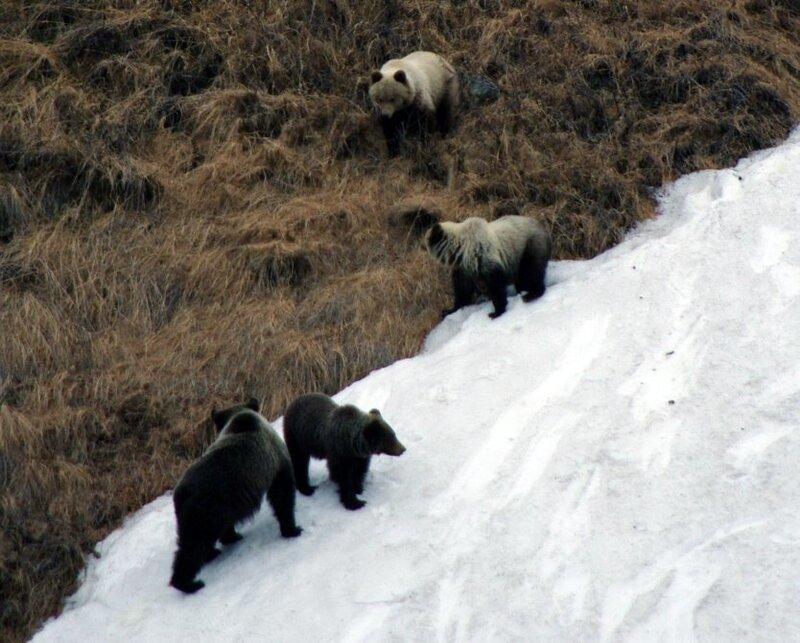 медведи1.jpg