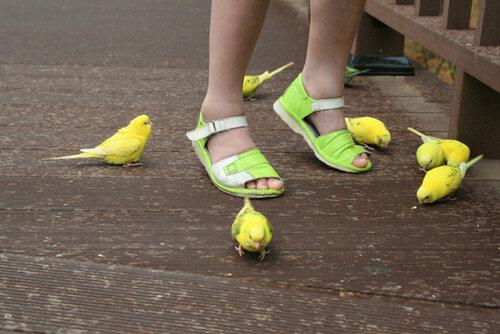 Там, где волнистые попугаи