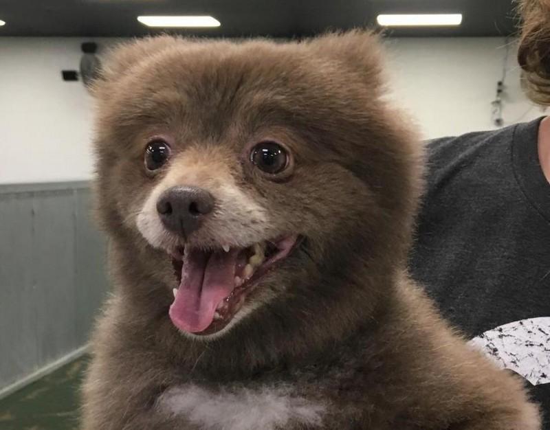 Новый спор в интернете: кто этот милашка – щенок или медвежонок?