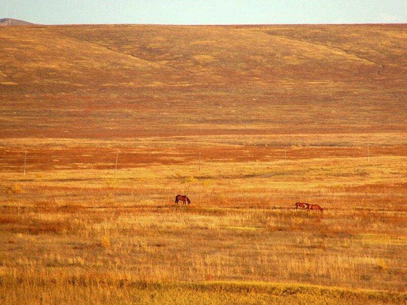 DSC04494на запад.кони.JPG