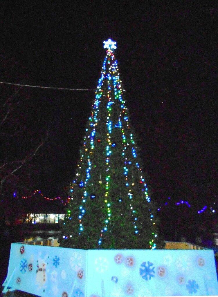 Вечер у ёлки новогодней ... DSCN2892.JPG