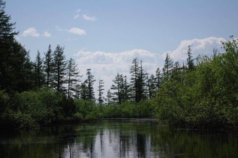 таежная река1_демо.jpg