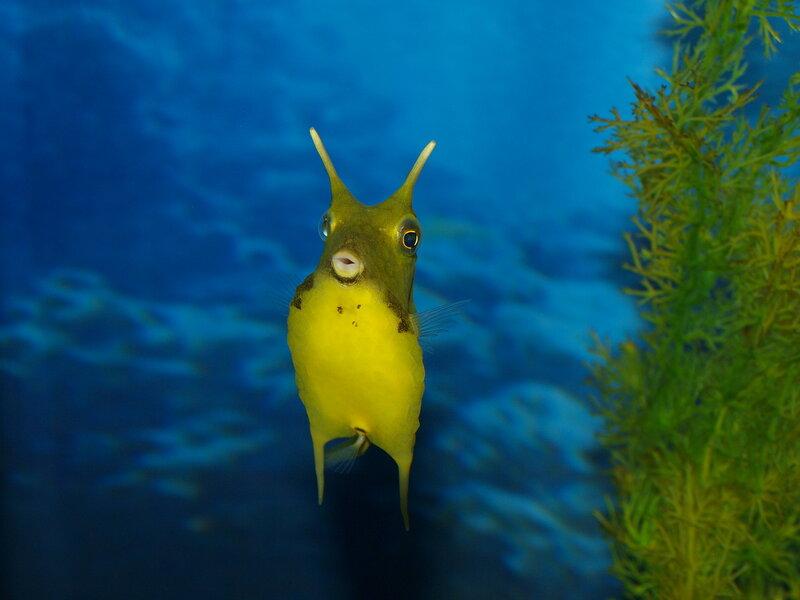 Рогатая рыбка