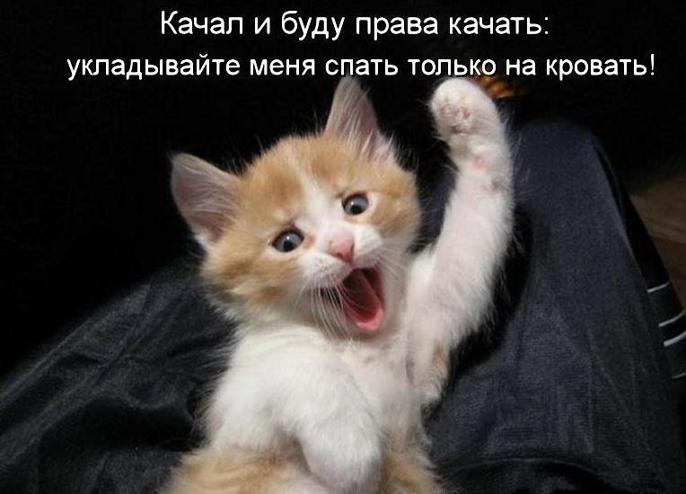 http://img-fotki.yandex.ru/get/3614/319301346.4d/0_11daa8_8acae8ea_orig