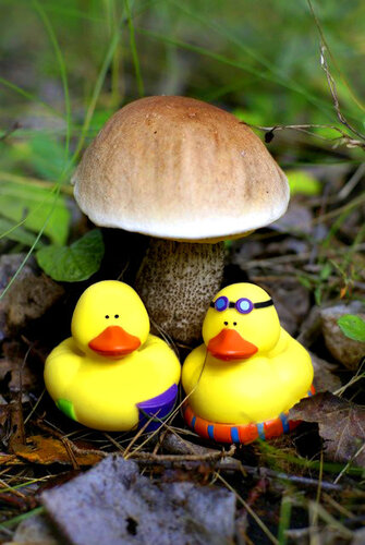 Уточка и грибы